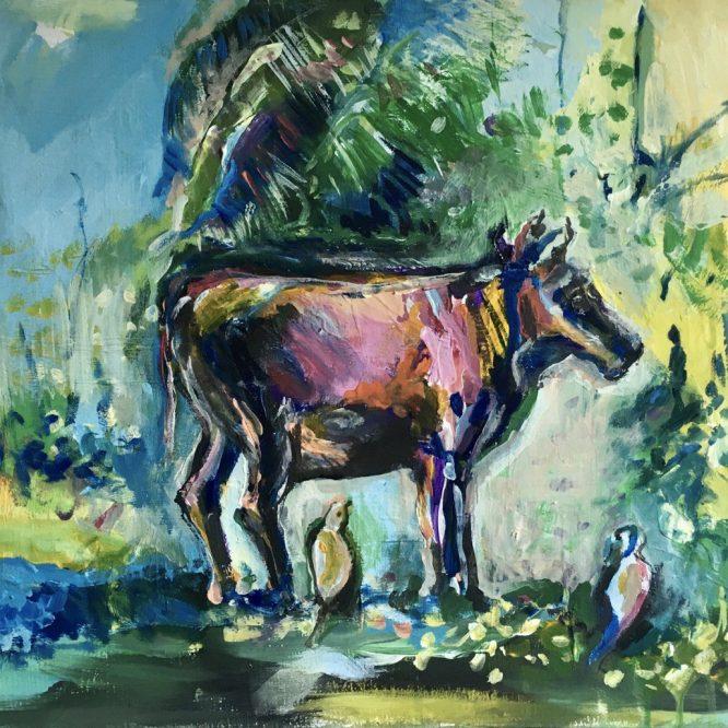 Sri Lankan cow